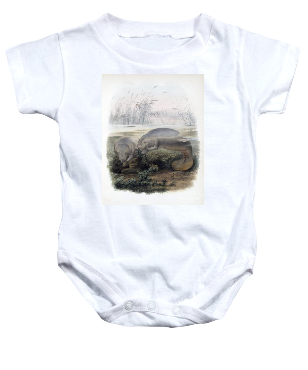Manatee Baby Onesie featuring the photograph Manatees, Vulnerble Species by Biodiversity Heritage Library
