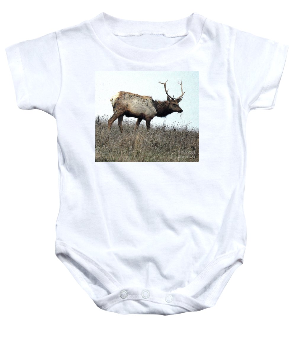 California Baby Onesie featuring the photograph Molting Tomales Bay Elk by Norman Andrus