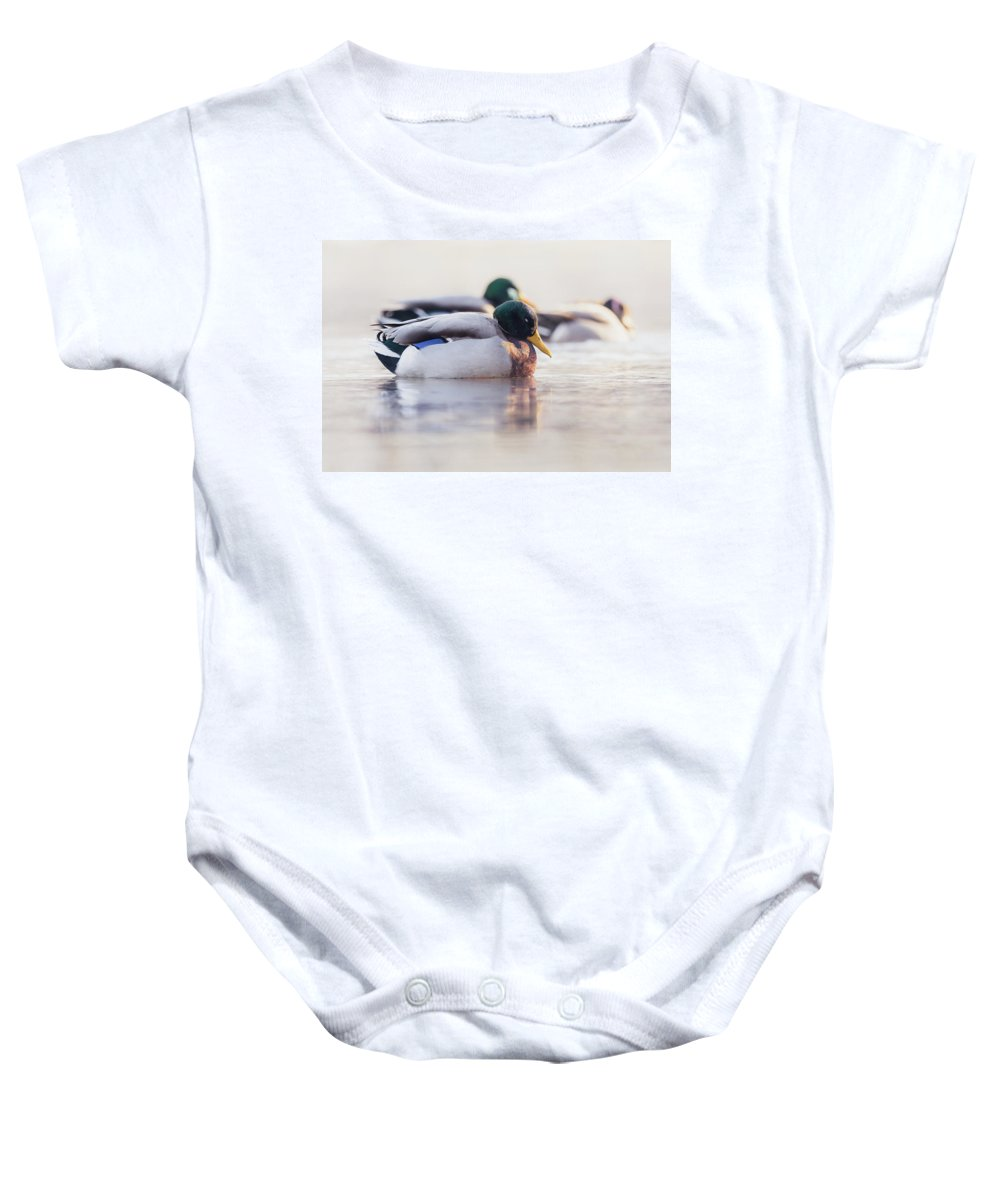 Duck Baby Onesie featuring the photograph Napping by Annette Bush