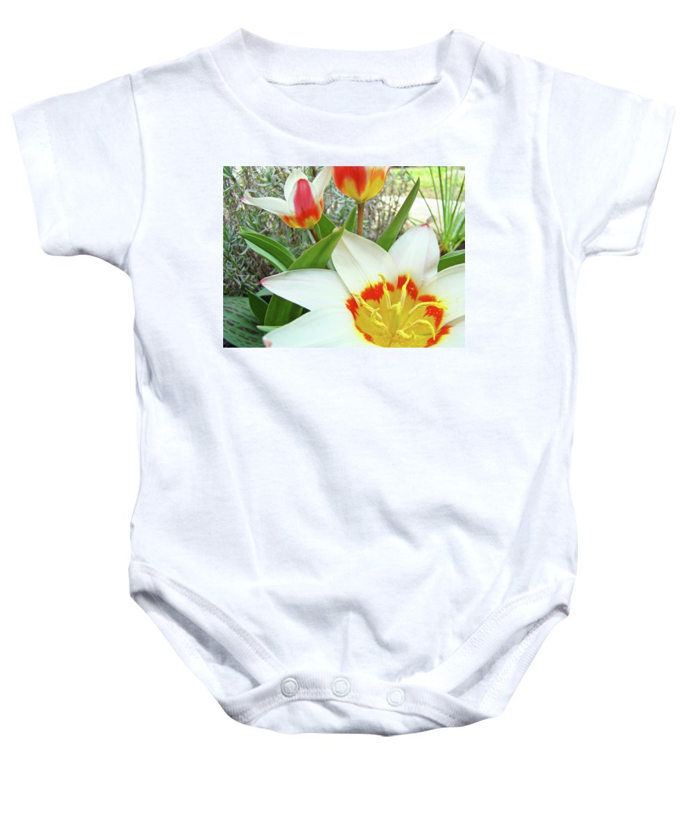 Tulip Baby Onesie featuring the photograph Office Art Tulips Tulip Flowers Giclee Art Prints Florals Baslee Troutman by Baslee Troutman