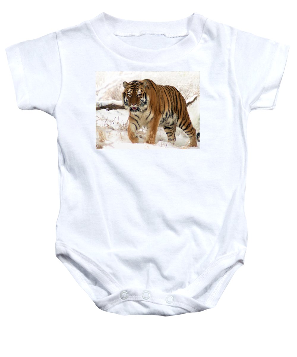 Tiger Baby Onesie featuring the photograph Orange In Winter by Bill Stephens