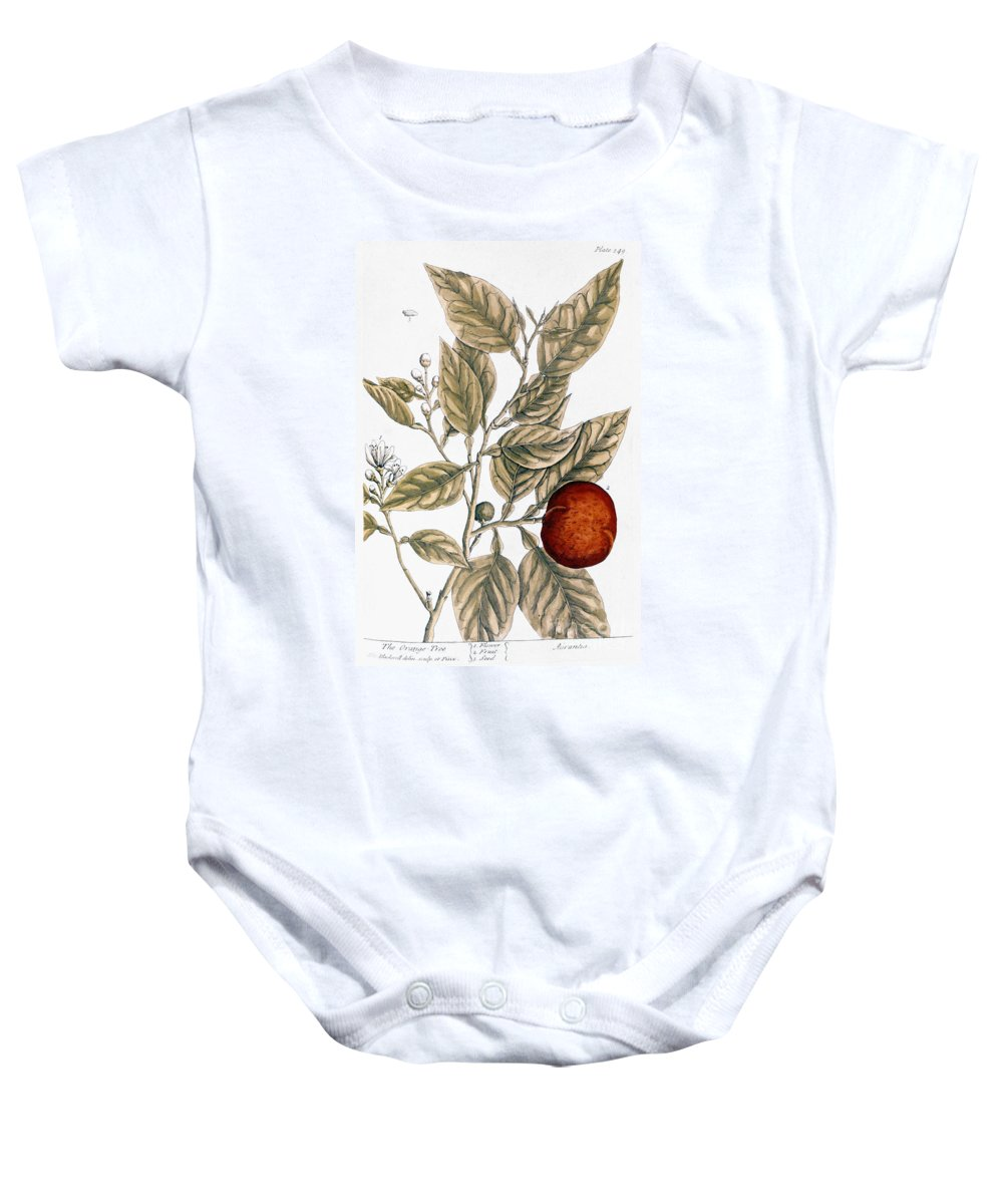 1730s Baby Onesie featuring the photograph Orange Tree, 1735 by Granger