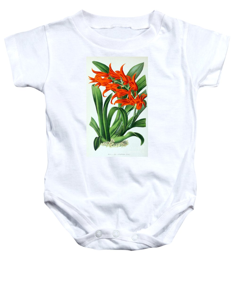 Horticulture Baby Onesie featuring the photograph Orchid, Ada Aurantiaca, 1880 by Biodiversity Heritage Library