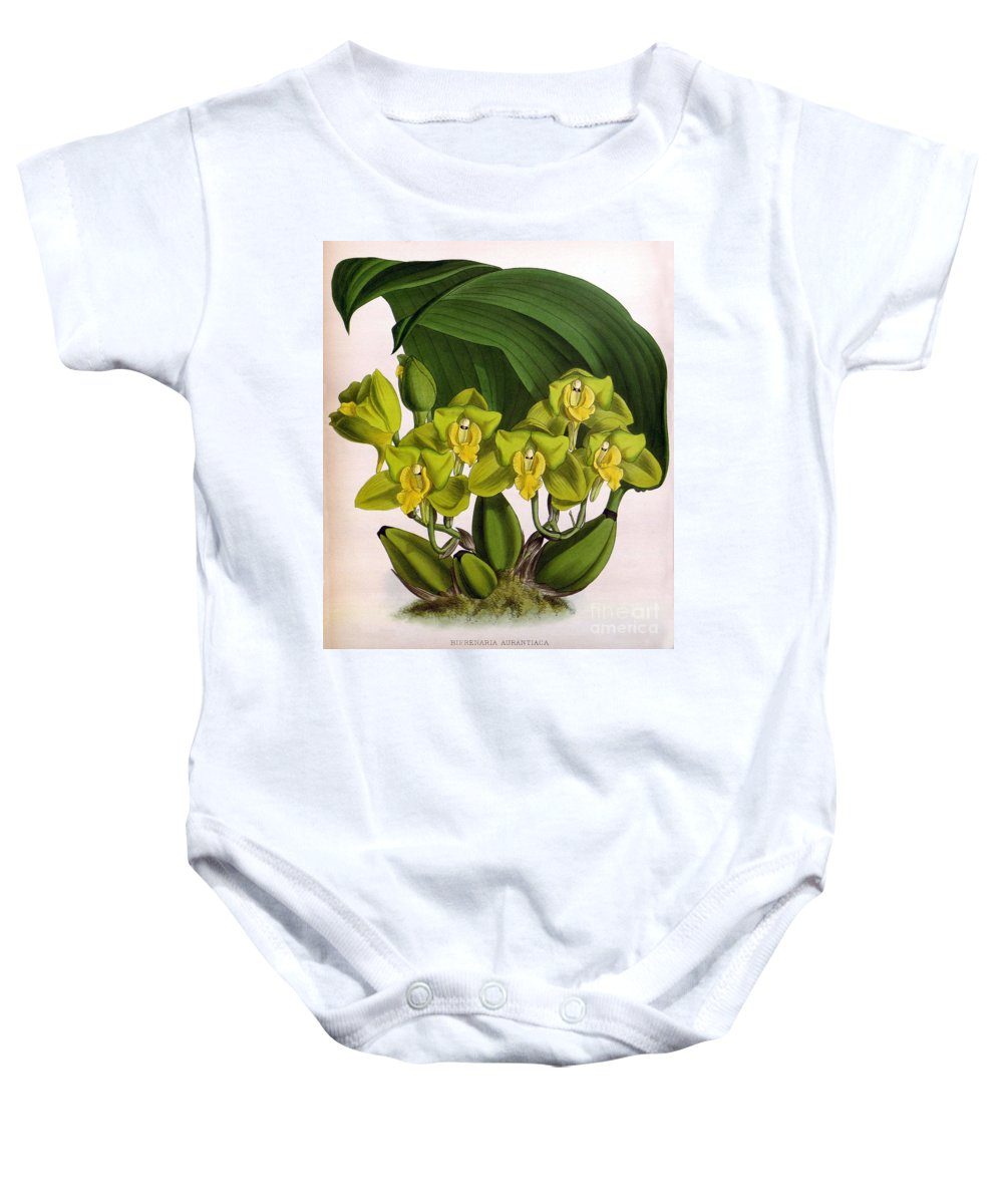 Horticulture Baby Onesie featuring the photograph Orchid, Bifrenaria Aurantiaca, 1891 by Biodiversity Heritage Library