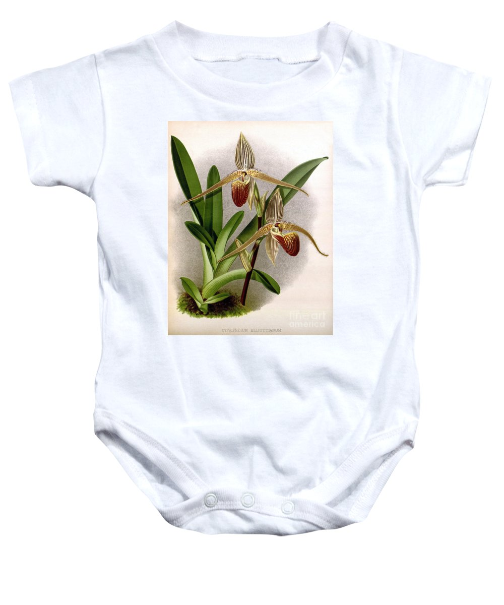 Horticulture Baby Onesie featuring the photograph Orchid, Cypripedium Elliottianum, 1891 by Biodiversity Heritage Library