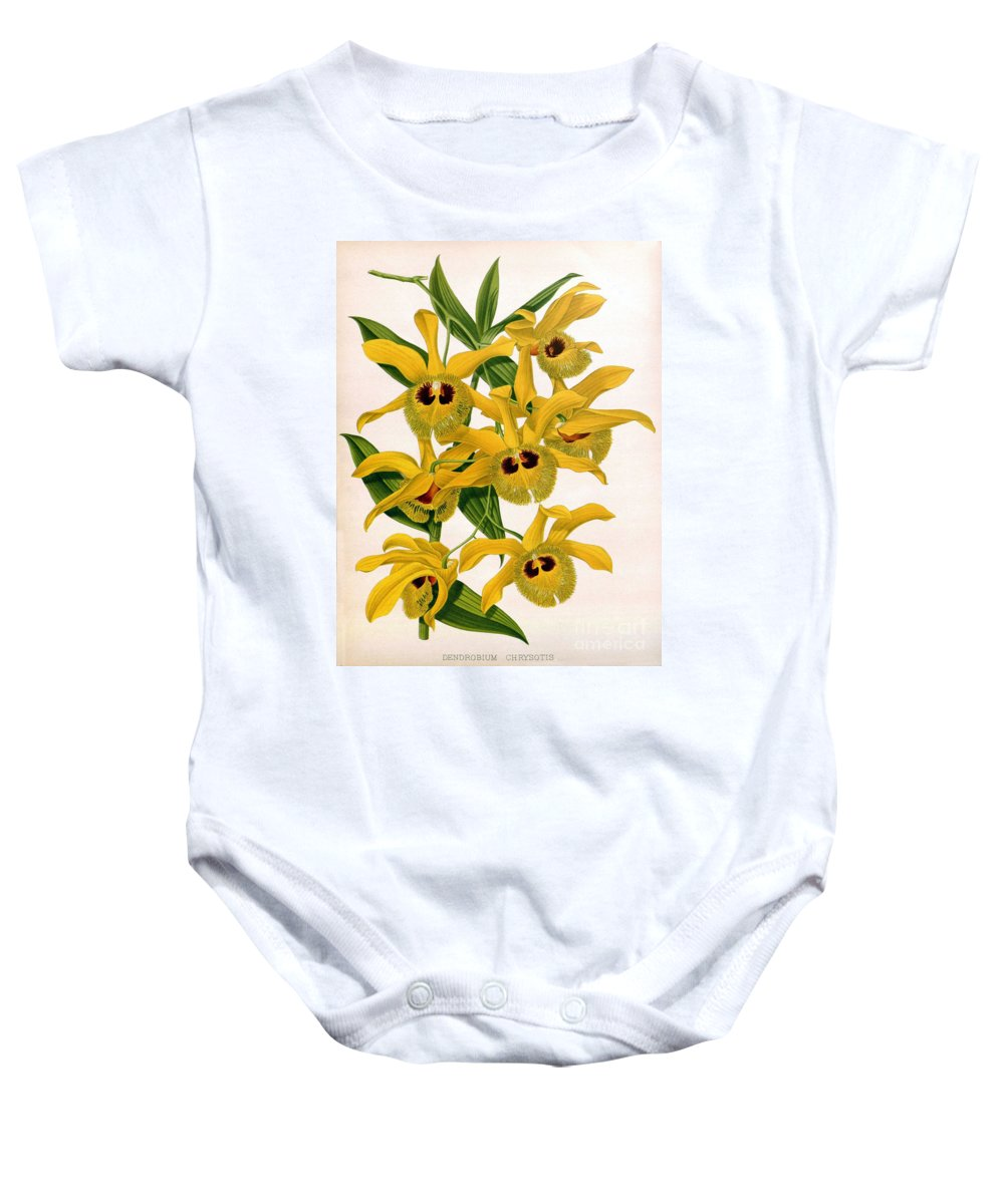 Horticulture Baby Onesie featuring the photograph Orchid, Dendrobium Chrysotis, 1891 by Biodiversity Heritage Library