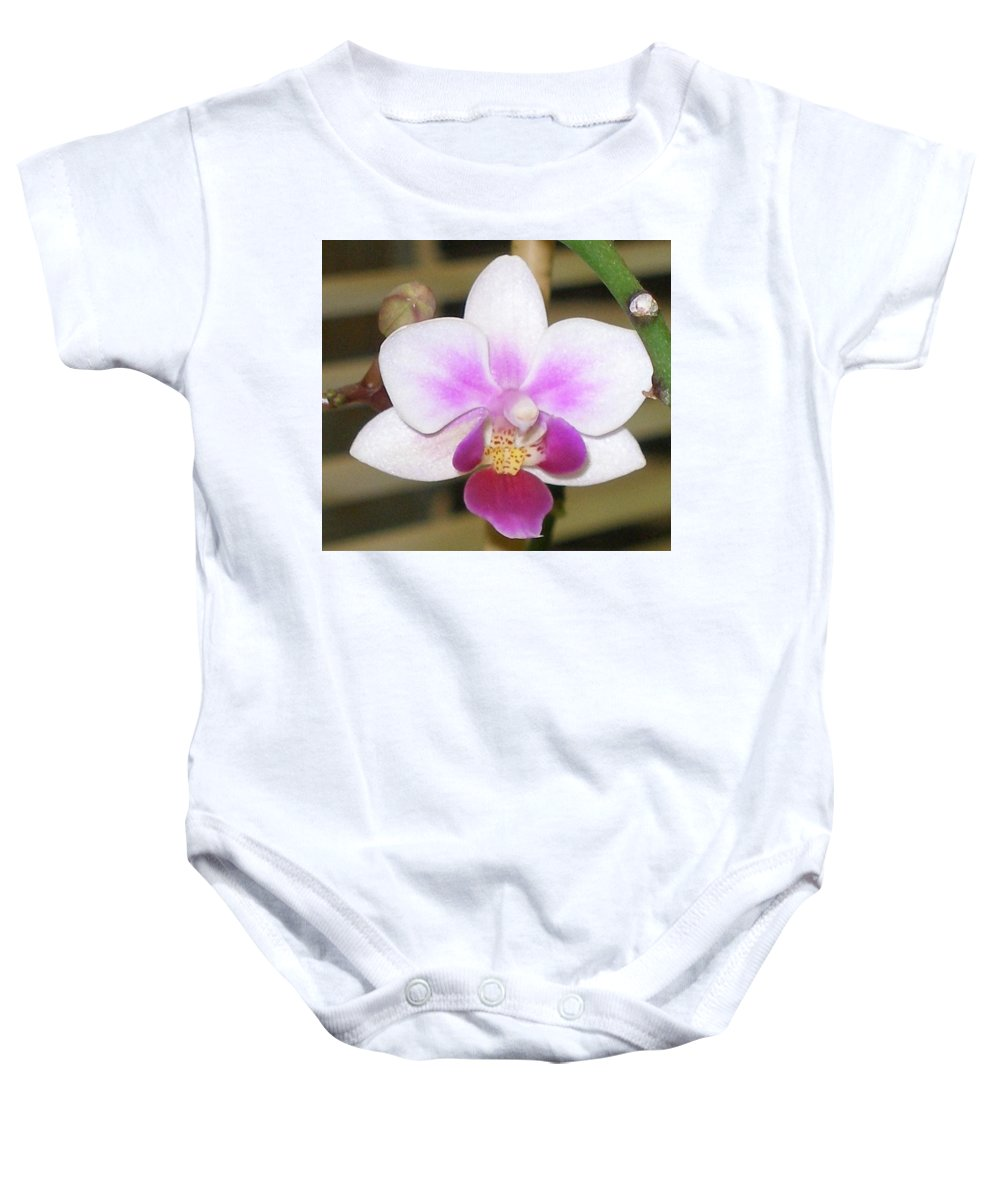 Purple Baby Onesie featuring the photograph Orchid Explosion by Maria Bonnier-Perez