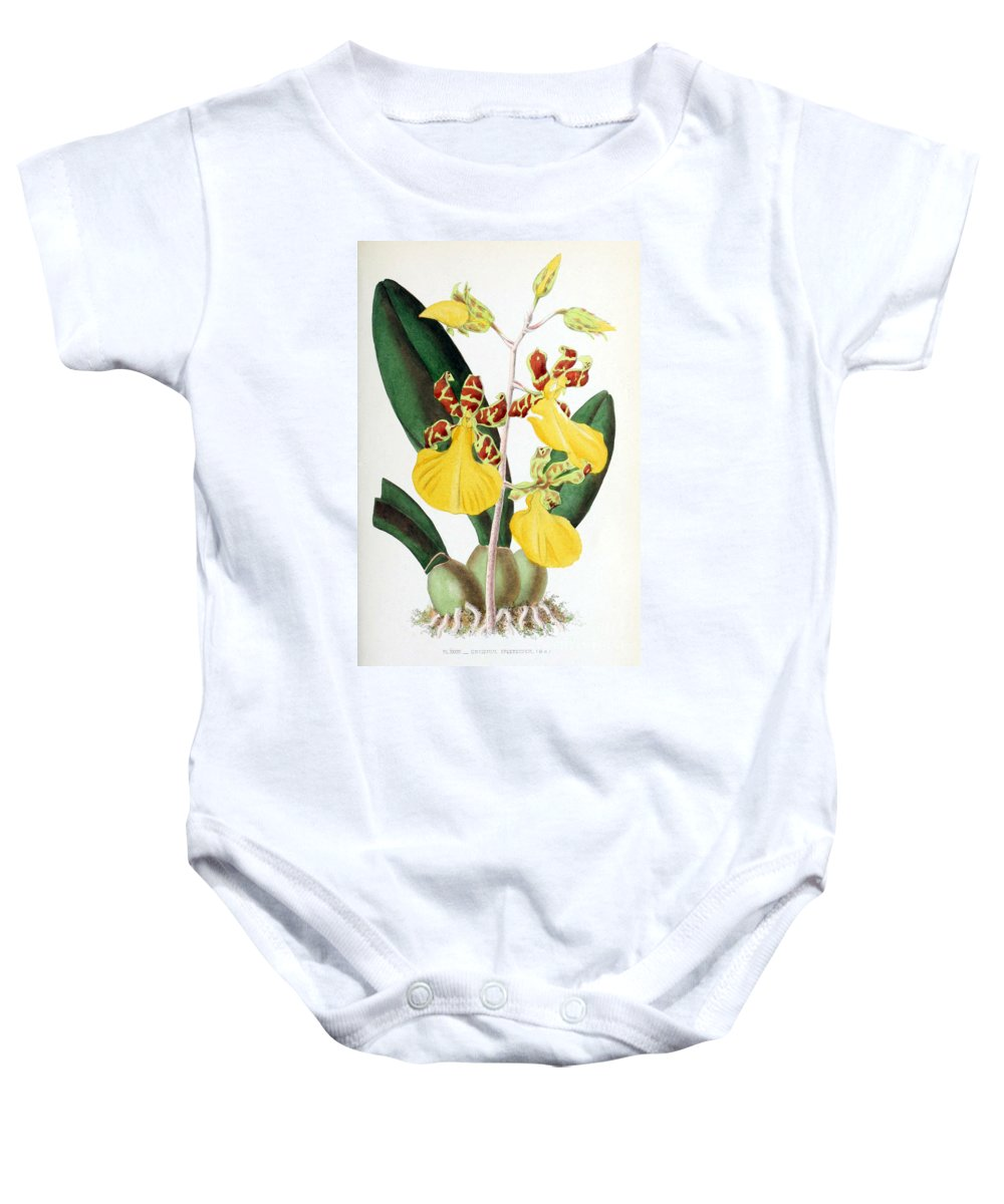Horticulture Baby Onesie featuring the photograph Orchid, Oncidium Splendidum, 1880 by Biodiversity Heritage Library