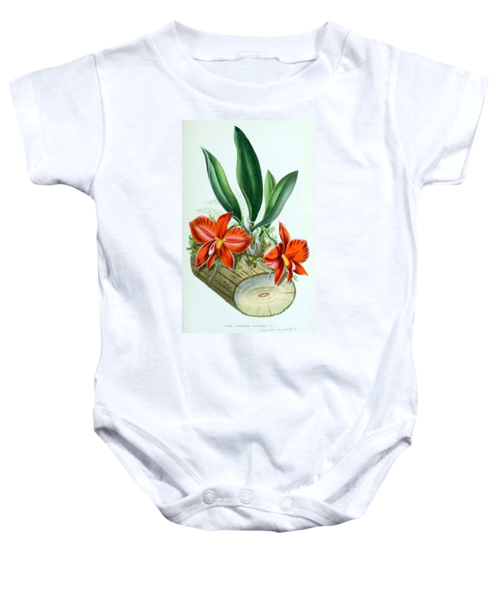 Horticulture Baby Onesie featuring the photograph Orchid, Sophronitis Grandiflora, 1880 by Biodiversity Heritage Library