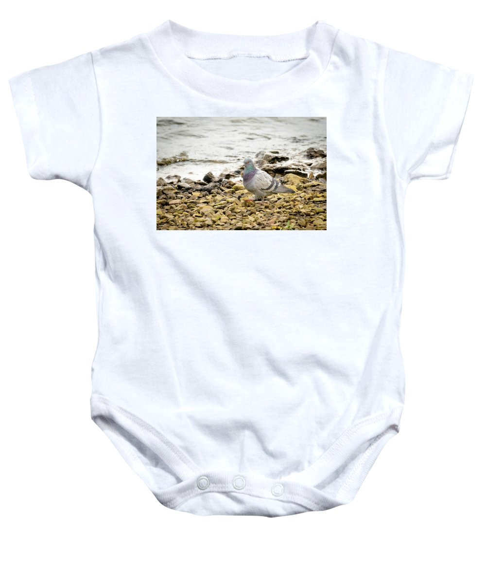 Pigeon Baby Onesie featuring the photograph Pigeon Close To The River by Alain De Maximy