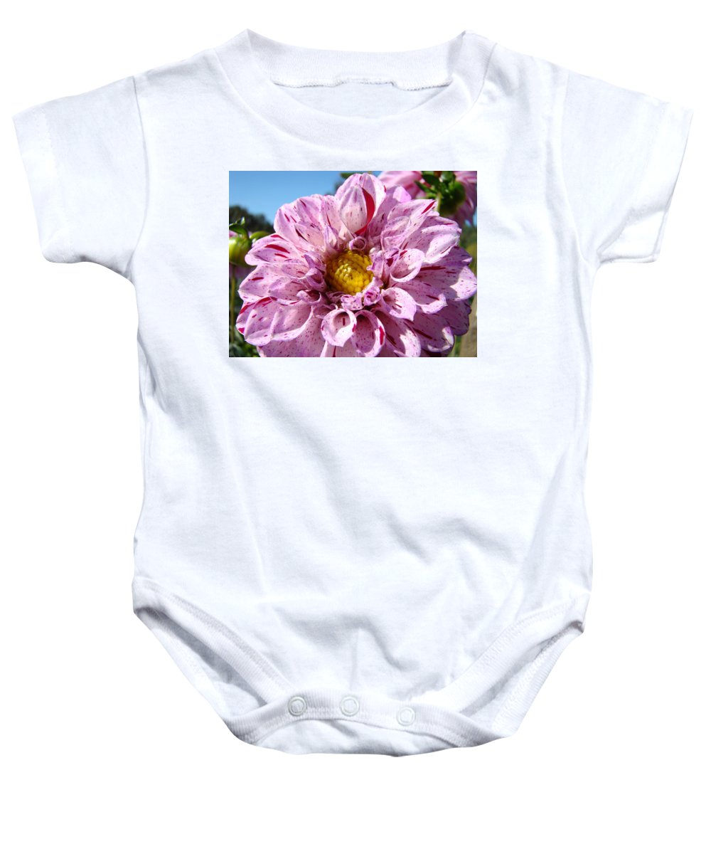 Dahlia Baby Onesie featuring the photograph Purple Dahlia Flowers Pink Floral Art Prints Canvas Garden Baslee Troutman by Baslee Troutman