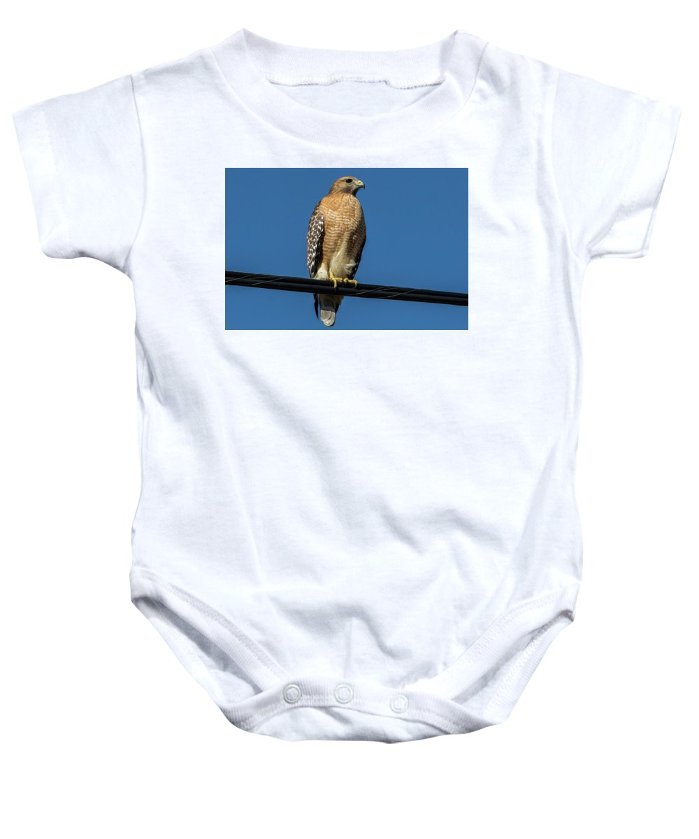 Nature Baby Onesie featuring the photograph Red-shoulder Hawk by Ronnie Prcin
