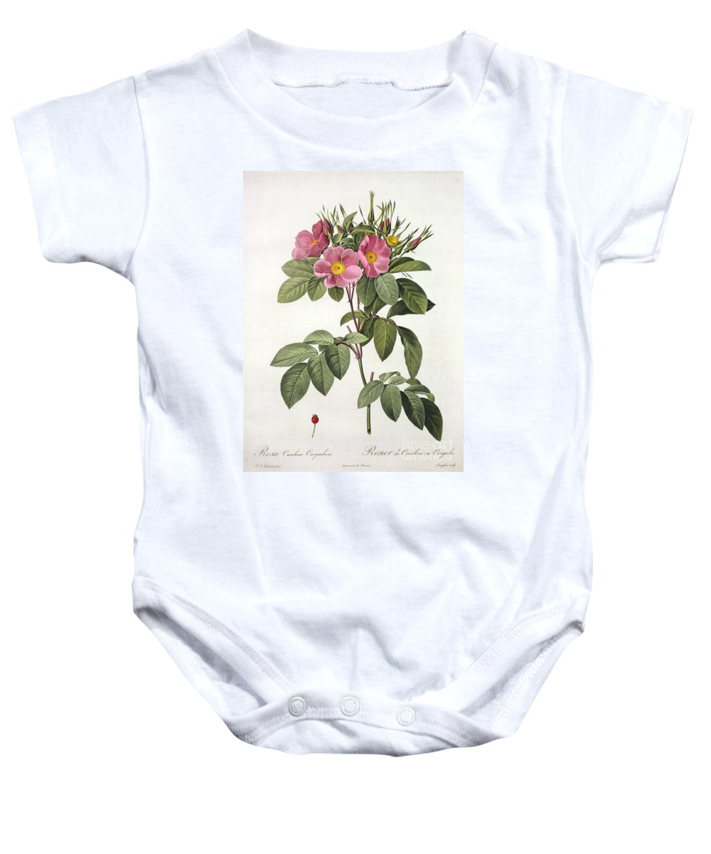 Rosa Baby Onesie featuring the drawing Rosa Carolina Corymbosa by Pierre Joseph Redoute