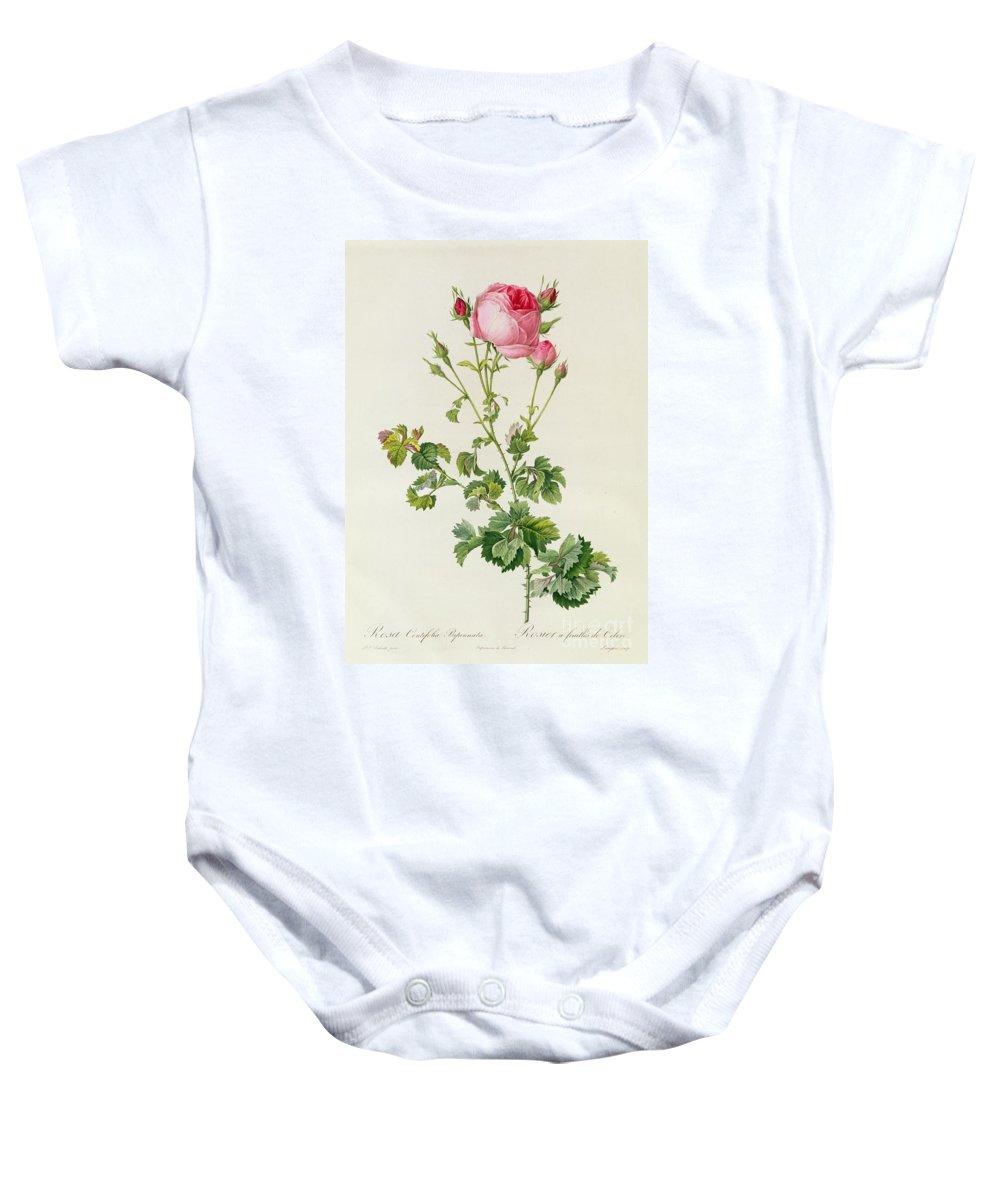 Rosa Baby Onesie featuring the painting Rosa Centifolia Bipinnata by Pierre Joseph Redoute
