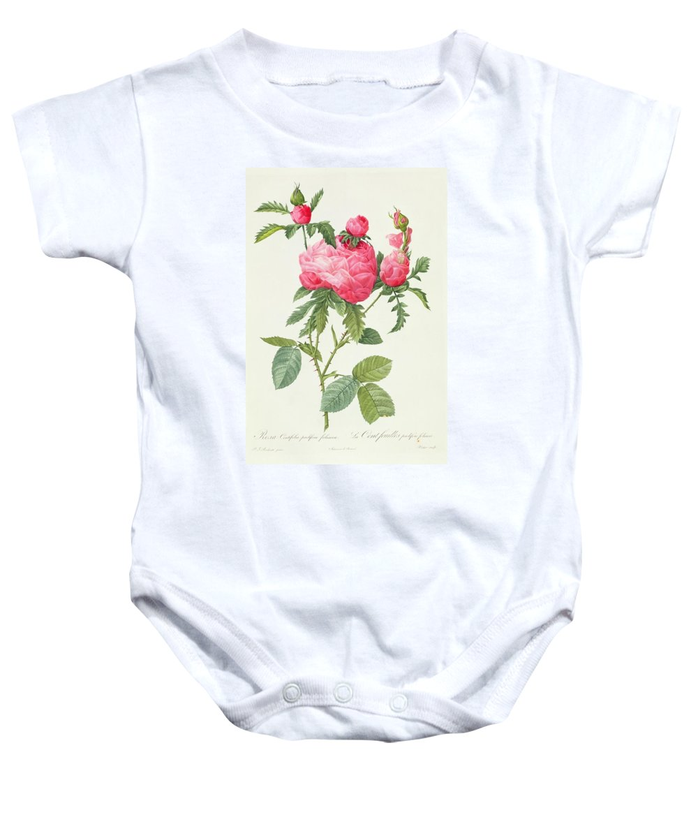 Rosa Baby Onesie featuring the drawing Rosa Centifolia Prolifera Foliacea by Pierre Joseph Redoute