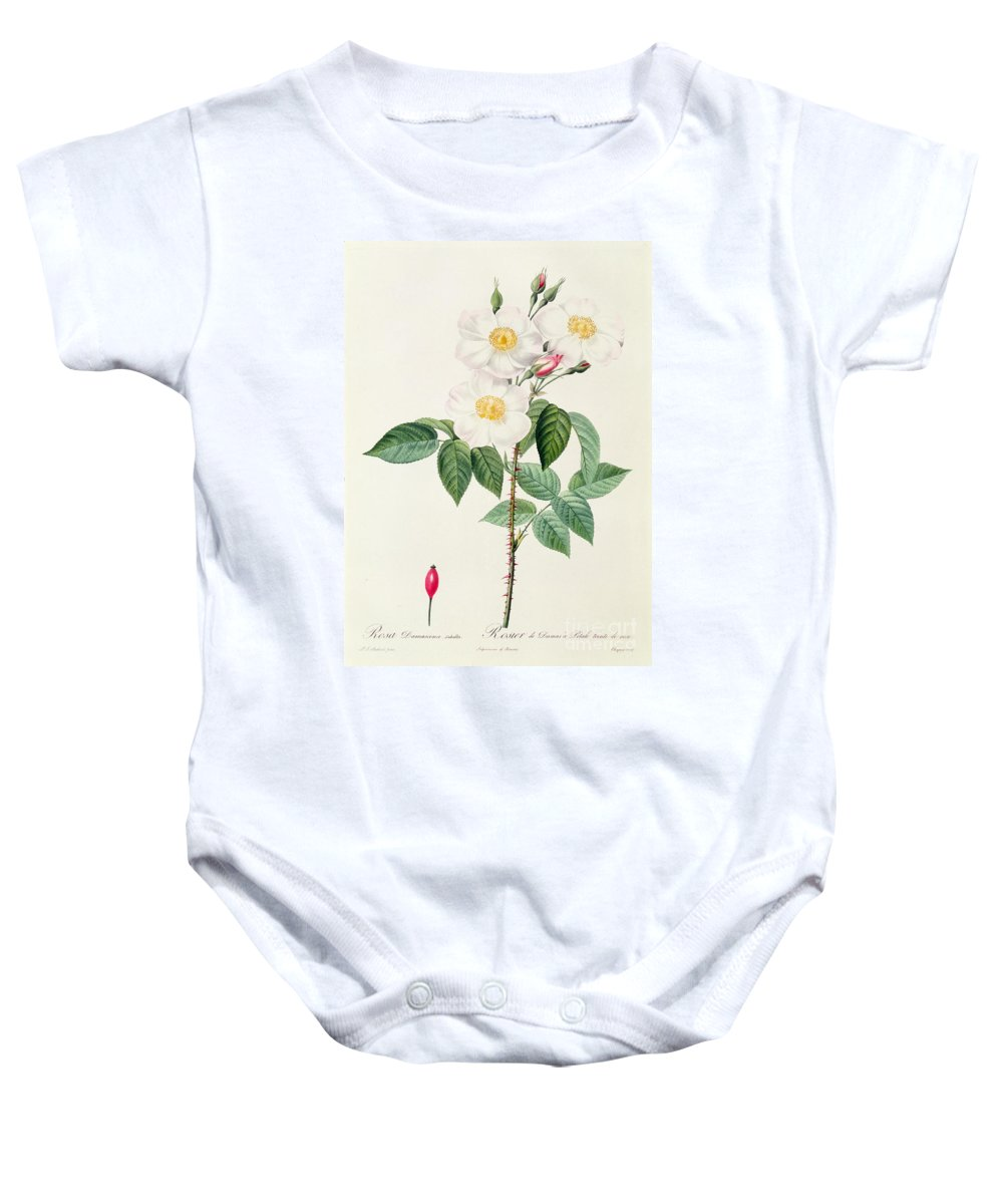 Rosa Baby Onesie featuring the drawing Rosa Damascena Subalba by Pierre Joseph Redoute