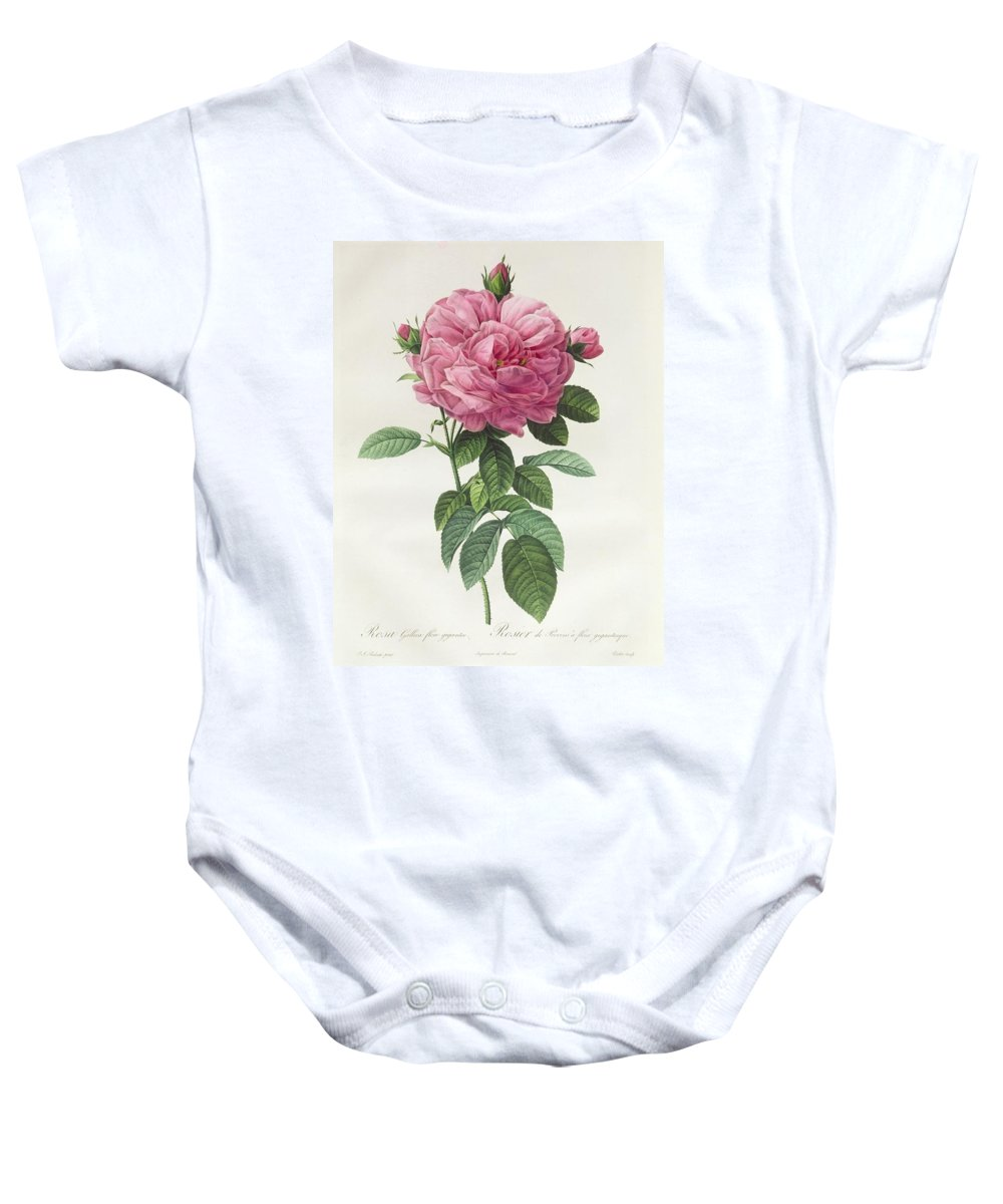 Rosa Baby Onesie featuring the drawing Rosa Gallica Flore Giganteo by Pierre Joseph Redoute