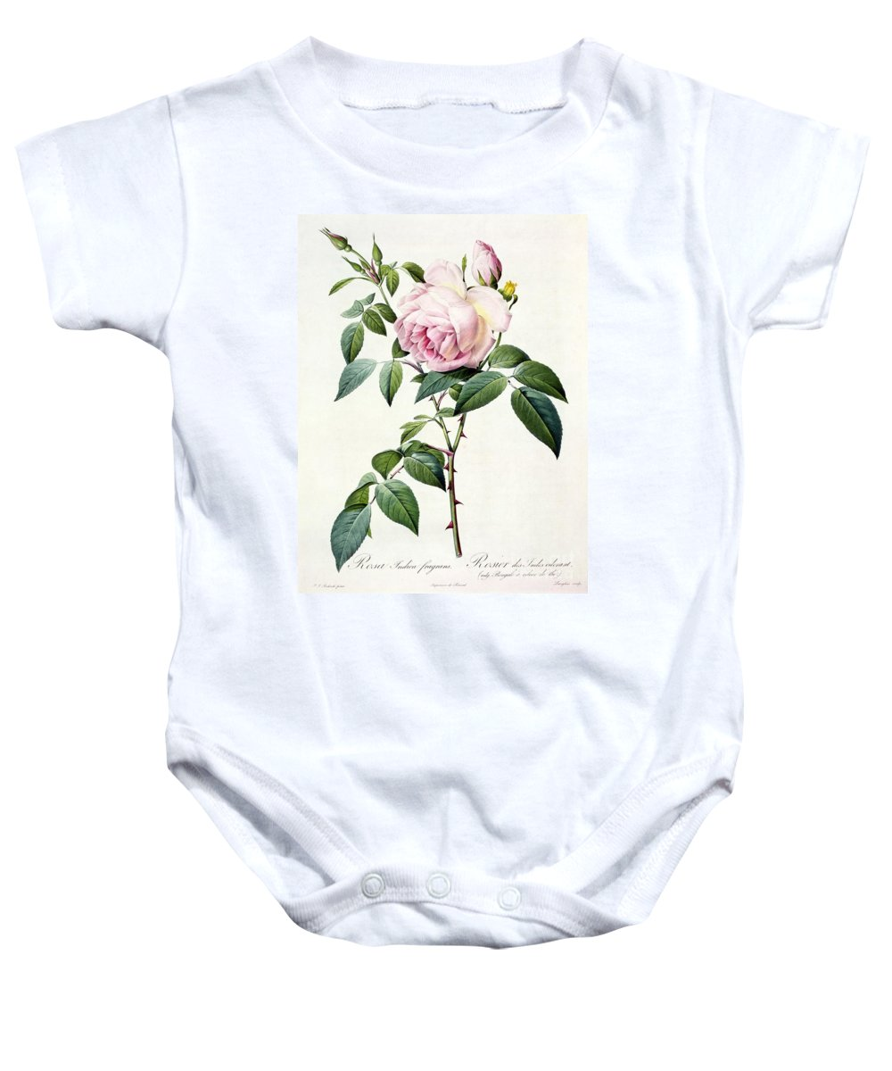 Rosa Baby Onesie featuring the drawing Rosa Indica Fragrans by Pierre Joseph Redoute