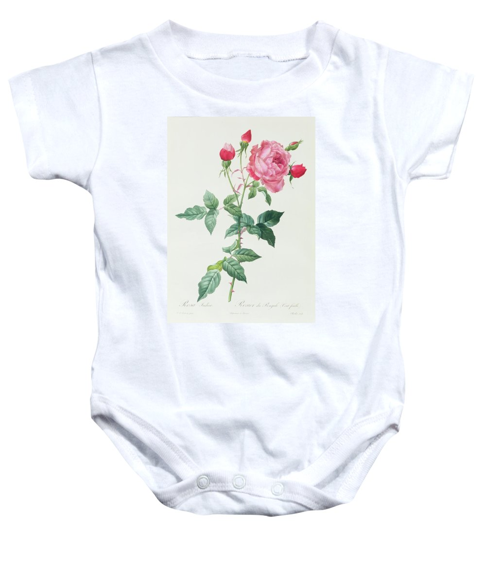 Rosa Baby Onesie featuring the drawing Rosa Indica by Pierre Joseph Redoute