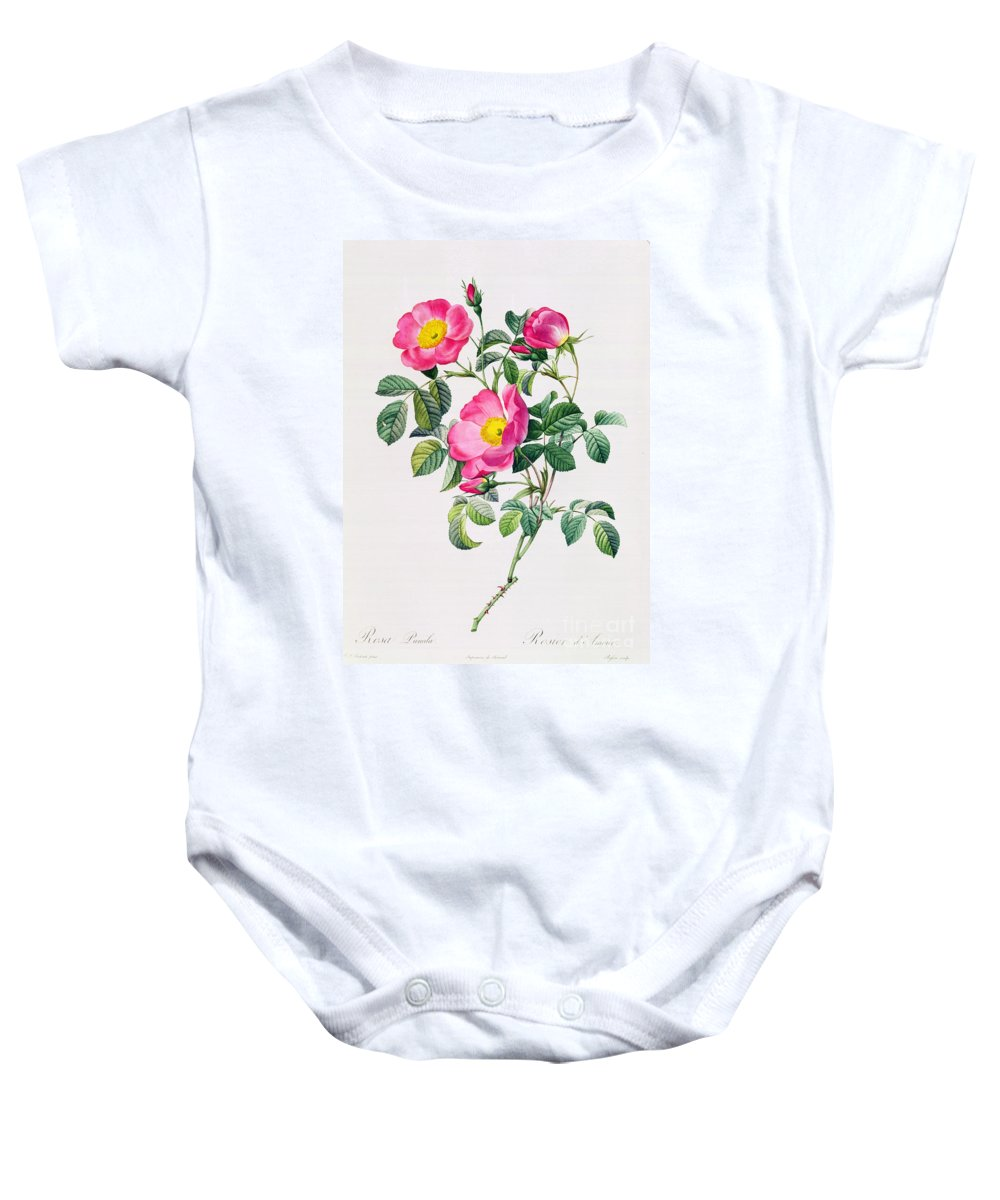 Rosa Baby Onesie featuring the drawing Rosa Lumila by Pierre Joseph Redoute