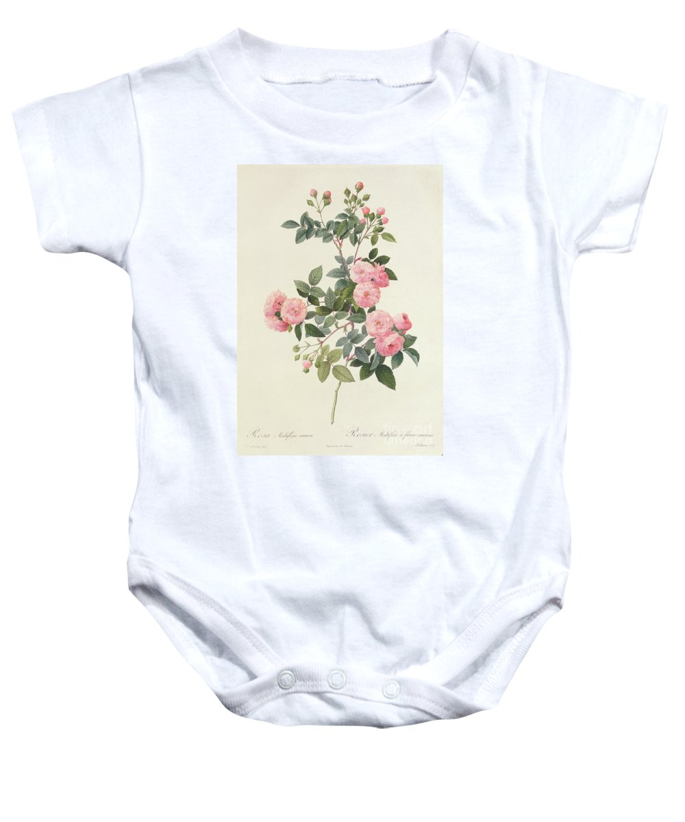 Rosa Baby Onesie featuring the drawing Rosa Multiflora Carnea by Pierre Joseph Redoute
