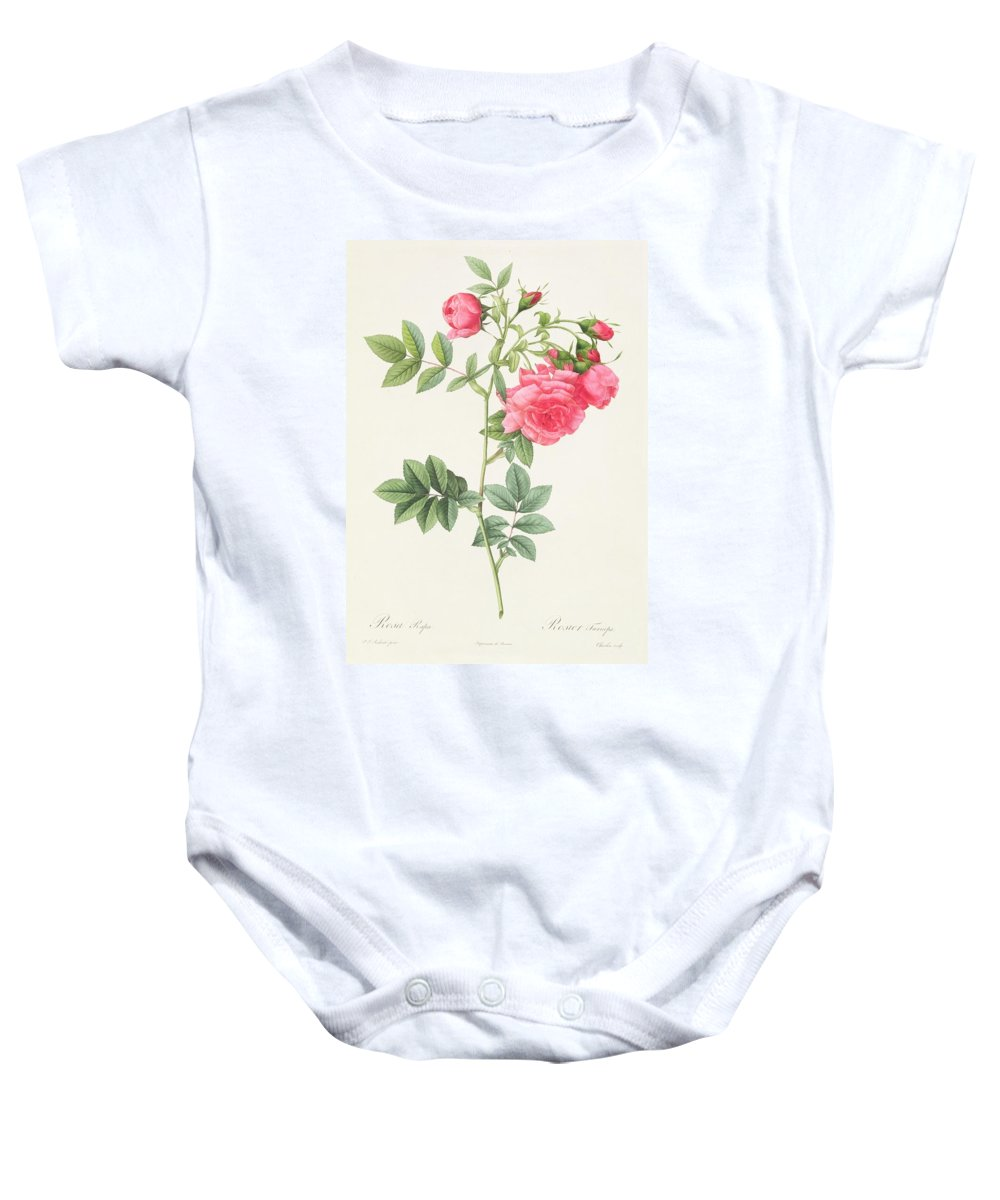 Rosa Baby Onesie featuring the drawing Rosa Pimpinellifolia Flore Variegato by Pierre Joseph Redoute