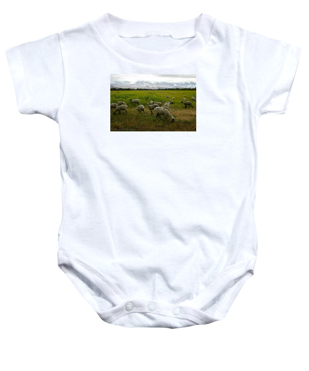 Sheep Baby Onesie featuring the photograph Sheep by Misty Tienken