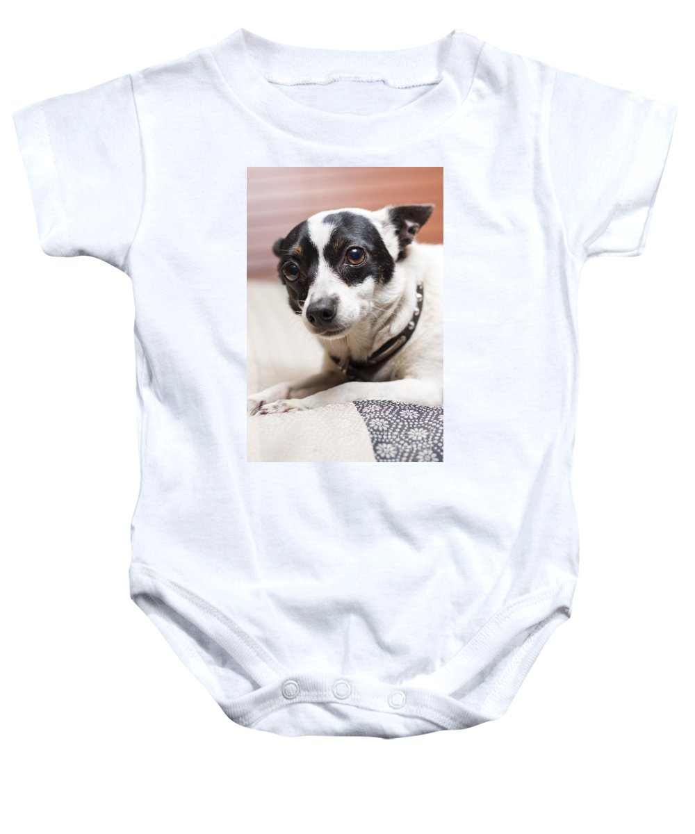 Dog Baby Onesie featuring the photograph Shy Lonely Mini Fox Terrier Dog Laying On A Bed by Jorgo Photography - Wall Art Gallery