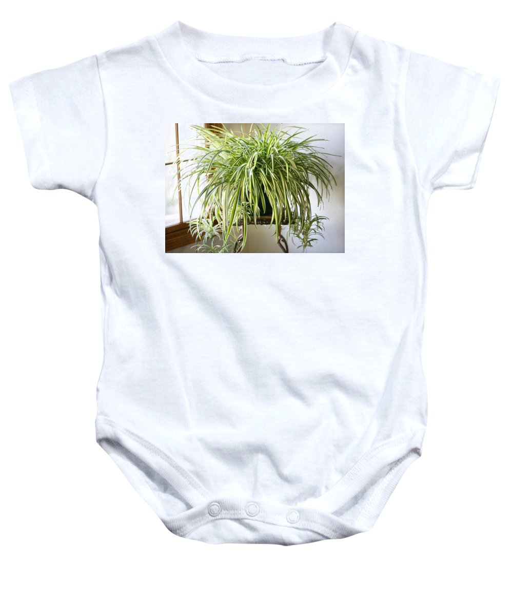 Spider Plant Baby Onesie featuring the photograph Spider Plant by Marilyn Hunt