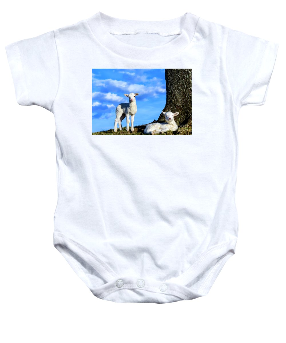 Lamb Baby Onesie featuring the photograph Spring Lambs Evening Light by Thomas R Fletcher