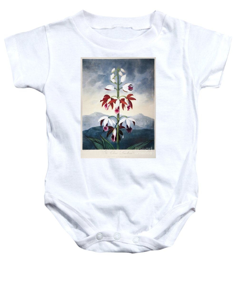 1802 Baby Onesie featuring the photograph Thornton: Limodoron by Granger