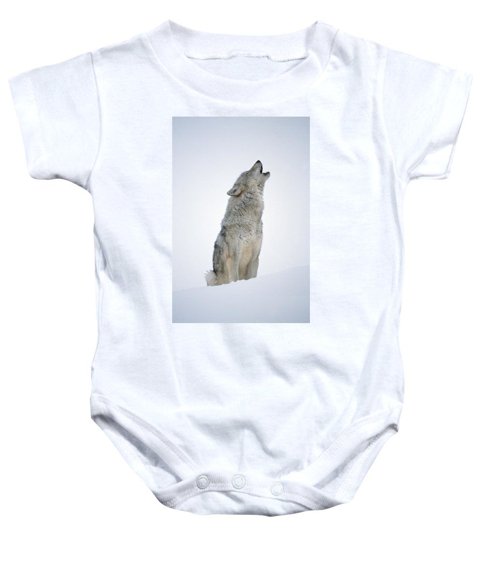 00174271 Baby Onesie featuring the photograph Timber Wolf Portrait Howling In Snow by Tim Fitzharris