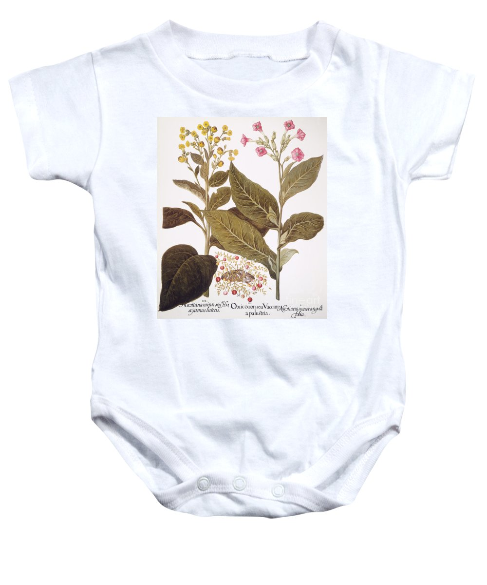 1613 Baby Onesie featuring the photograph Tobacco Rustica, 1613 by Granger