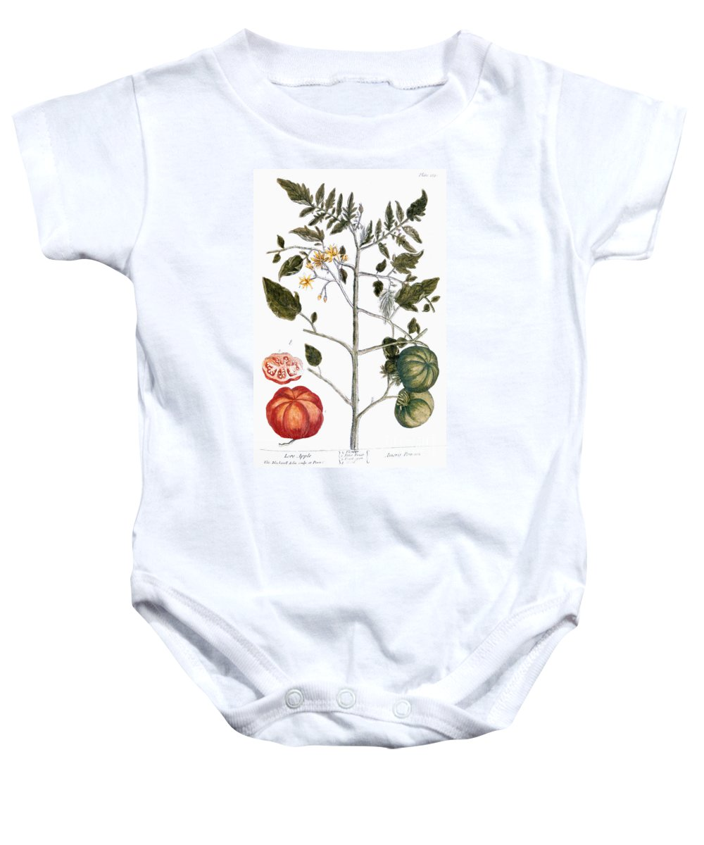 1730s Baby Onesie featuring the photograph Tomato Plant, 1735 by Granger