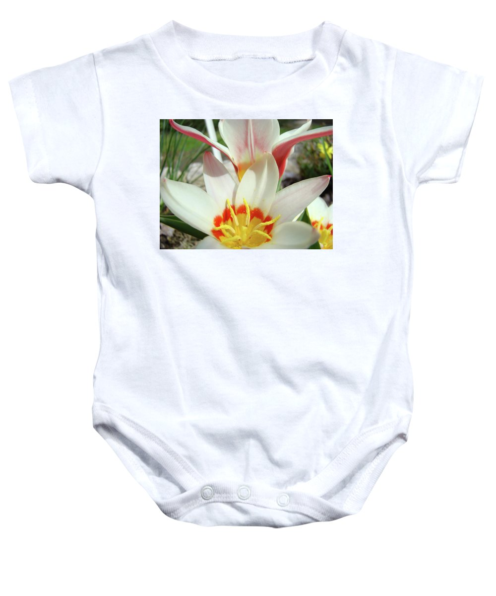 �tulips Artwork� Baby Onesie featuring the photograph Tulips Flowers Artwork 1 Tulip Flower Art Prints Spring Floral Art White Tulips Garden by Baslee Troutman