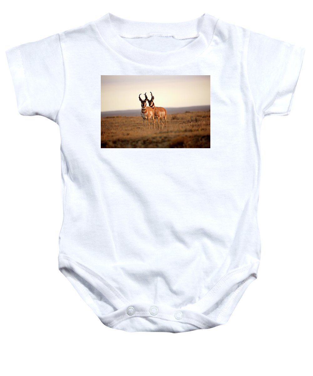 Pronghorn Antelope Baby Onesie featuring the digital art Two Male Pronghorn Antelopes In Alberta by Mark Duffy