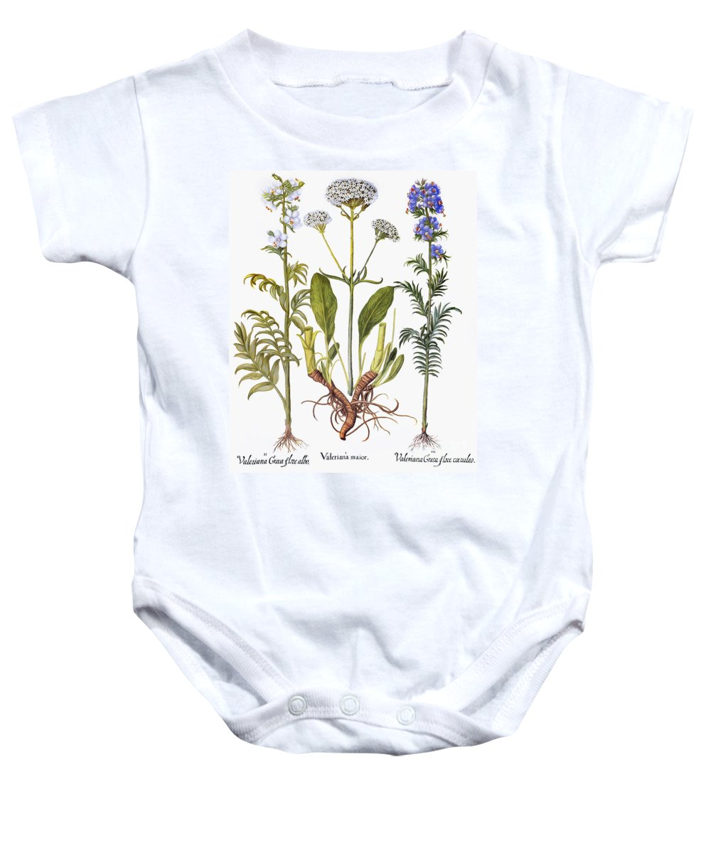 1613 Baby Onesie featuring the photograph Valerian Flowers, 1613 by Granger