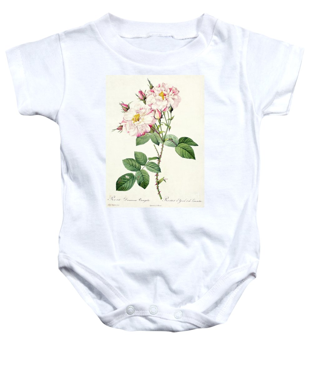 Rosa Baby Onesie featuring the drawing York And Lancaster Rose by Pierre Joseph Redoute