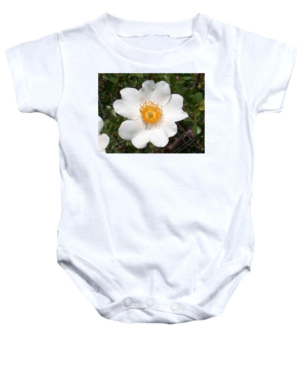 Wild Rose Baby Onesie featuring the photograph Wild Texas Rose, White by Joney Jackson