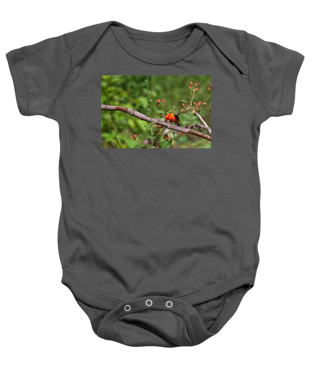 Scarlet Tanager Baby Onesie featuring the photograph Berry Eating Scarlet Tanager by Randall Branham