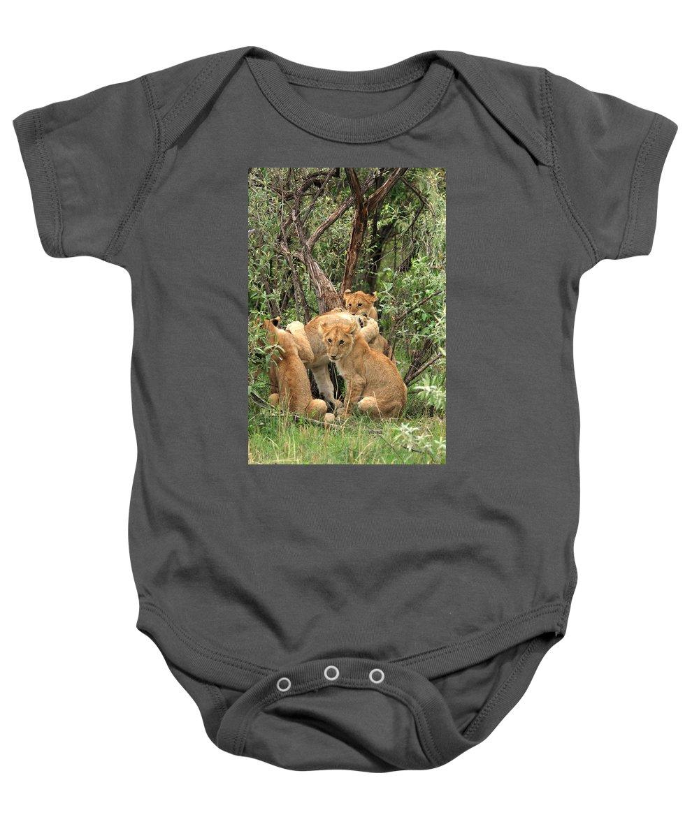 Africa Baby Onesie featuring the photograph Masai Mara Lion Cubs by Aidan Moran
