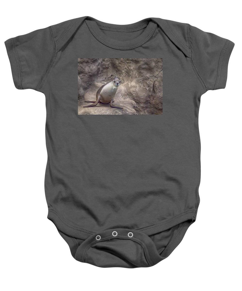 Sea Lion Baby Onesie featuring the photograph Center Of Attraction by Douglas Barnard