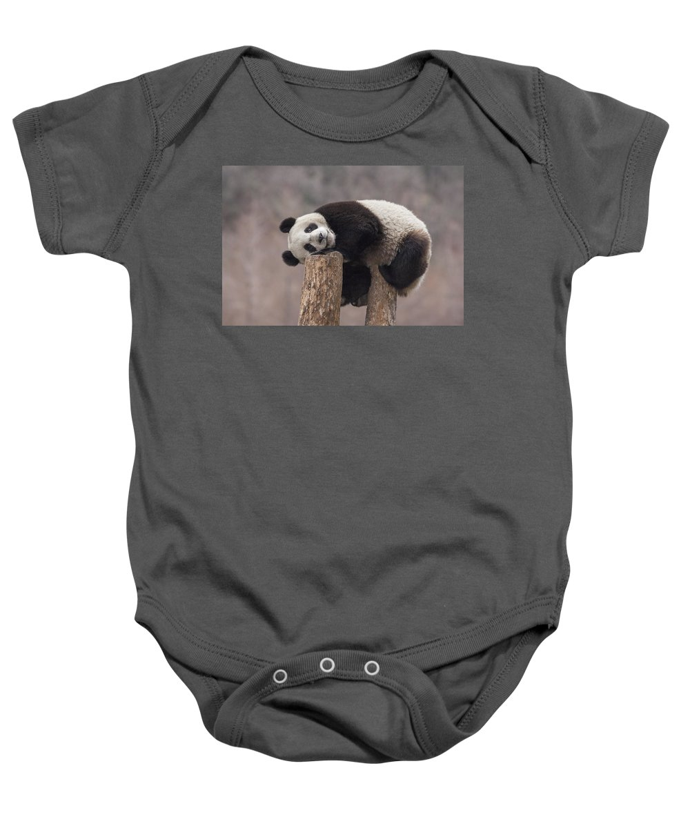 Katherine Feng Baby Onesie featuring the photograph Giant Panda Cub Wolong National Nature by Katherine Feng