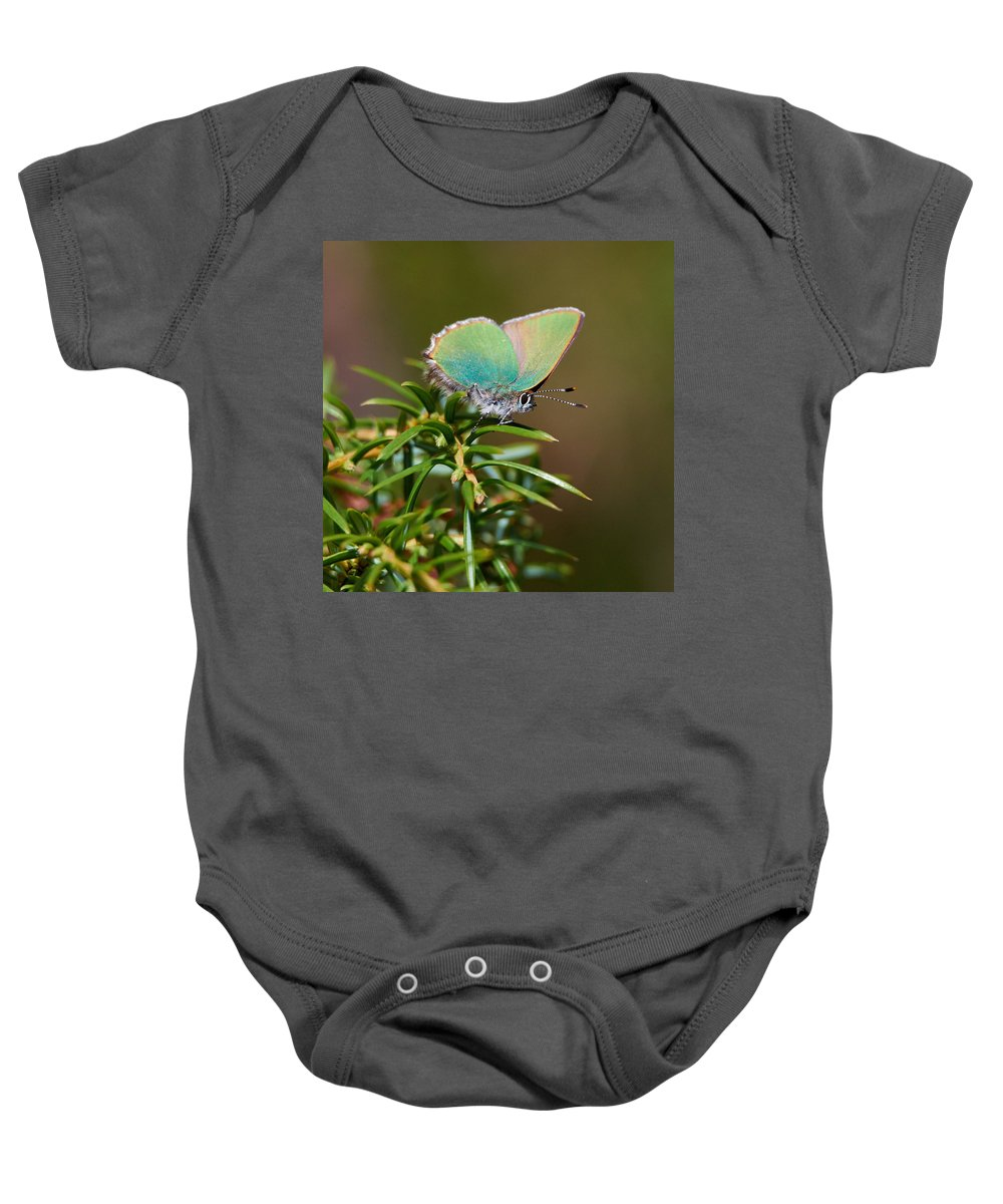 Callophrys Rubi Baby Onesie featuring the photograph Green Hairstreak by Jouko Lehto