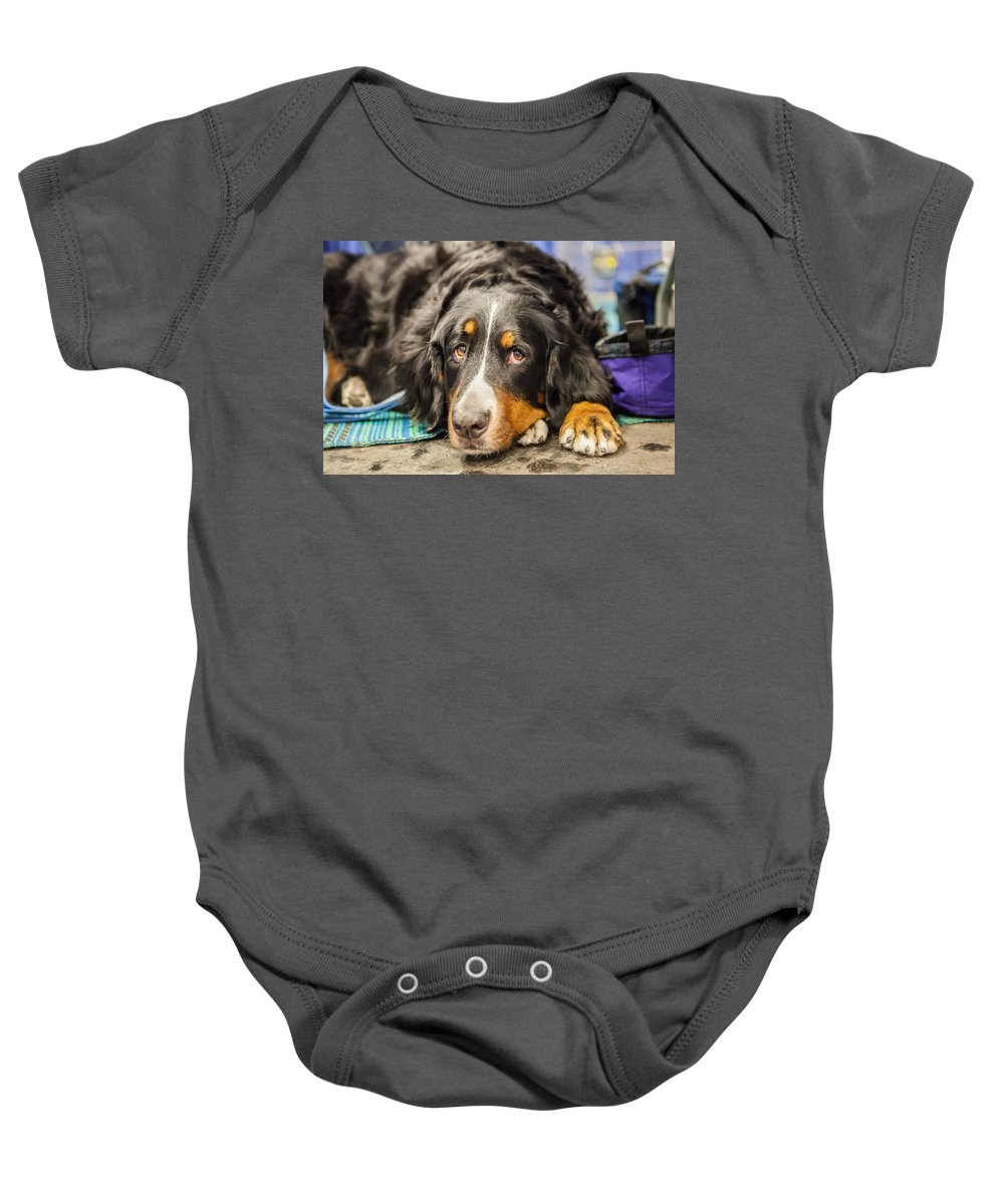 Dog Baby Onesie featuring the photograph I'm Ready by Lance Pecchia