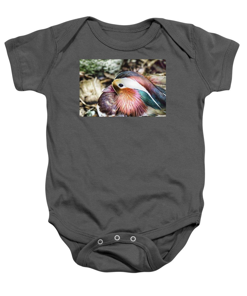 Mandarin Duck Baby Onesie featuring the photograph Mandarin Duck by Douglas Barnard