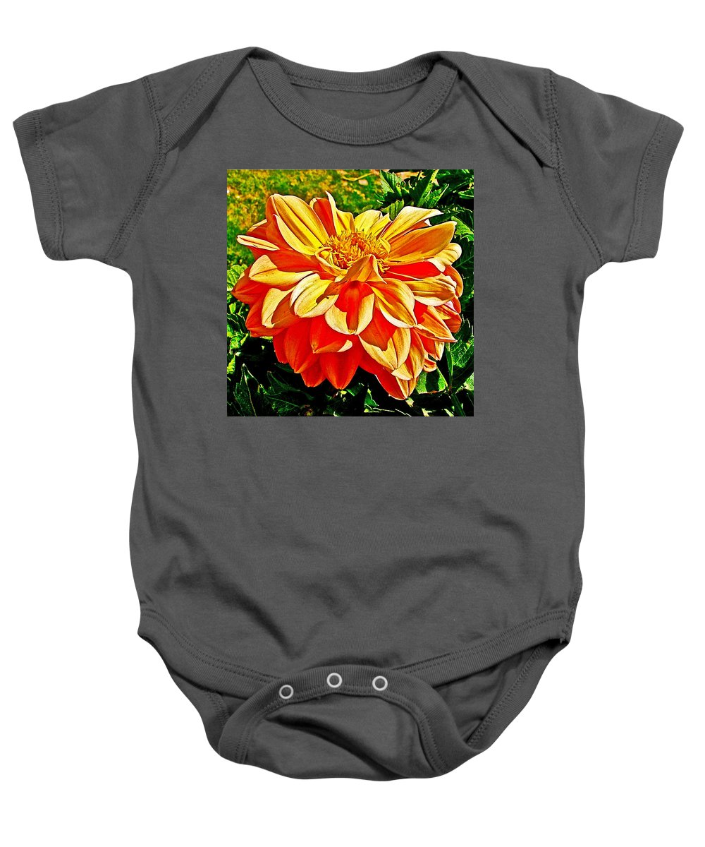 Orange Dahlia On Taquille Island In Lake Titicaca Baby Onesie featuring the photograph Orange Dahlia On Taquille Island In Lake Titicaca-peru by Ruth Hager