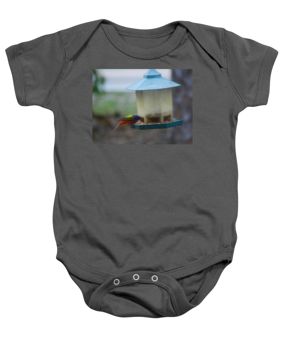Feeding At My Bird Feeder Baby Onesie featuring the photograph Painted Bunting by Robert Floyd