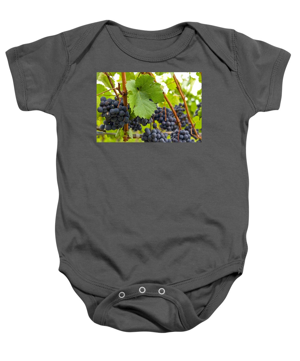 Red Wine Baby Onesie featuring the photograph Red Wine Vineyard 3 by David Gn