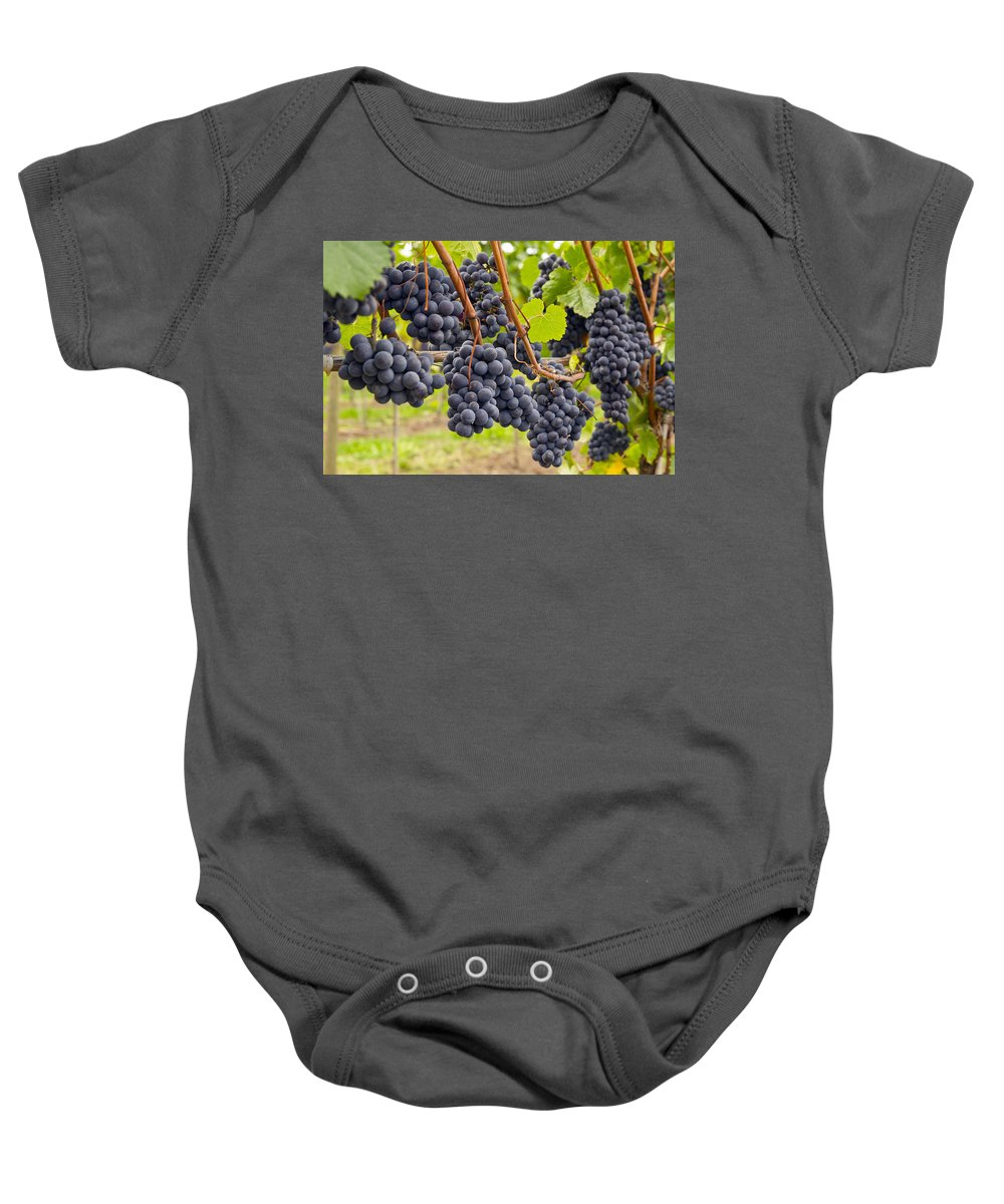 Red Wine Baby Onesie featuring the photograph Red Wine Vineyard 4 by David Gn